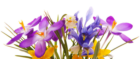 Colorful spring flowers isolated .