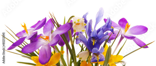 Foto op Canvas Iris Colorful spring flowers isolated .