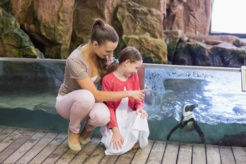 Happy family looking at penguins