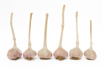 Garlics on white background