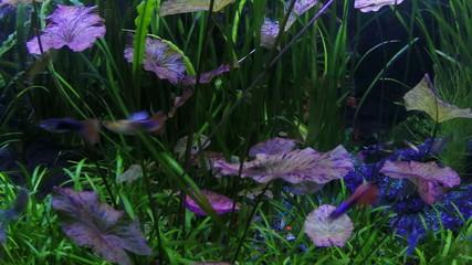 Underwater scene. colorful fish groups