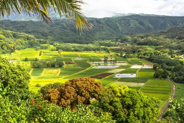 Hanalei Valley in Kauai, Hawaii