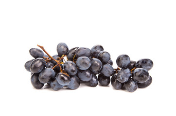 Branch of black ripe grapes
