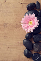 pink flower with stones