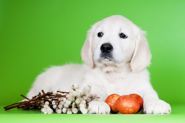 golden retriever puppy with easter eggs