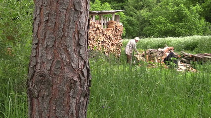 villager chop the thick willow brackets near the woodshed