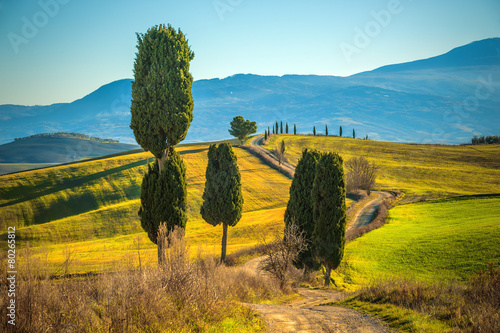 Cypress trees on the road to a farmhouse in the Tuscan landscape - 80265812