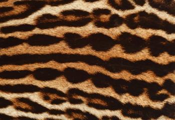 pelliccia di leopardo