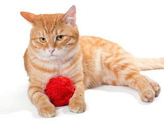 Orange cat and a sphere of red wool