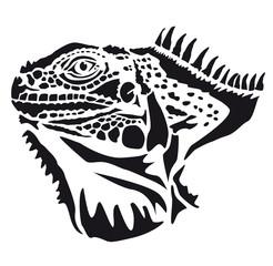 Head of iguana - lizard Sauria