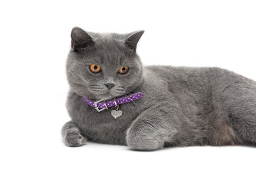 cat wearing a collar with a pendant on a white background close-