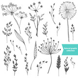 Fototapety Beautiful color grass silhouette collection