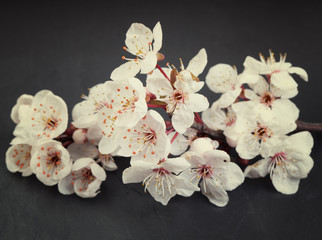 Beautiful and relaxing cherry blossom flowers on a dark tile sla