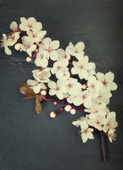 Relaxing cherry blossom flowers on a dark tile background
