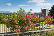 Leinwandbild Motiv Hawkshead Lake District UK pink roses and church