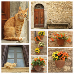 dog, cats and flowers on idyllic tuscan terrace