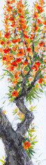 Watercolor background. Spring blooming of an old tree