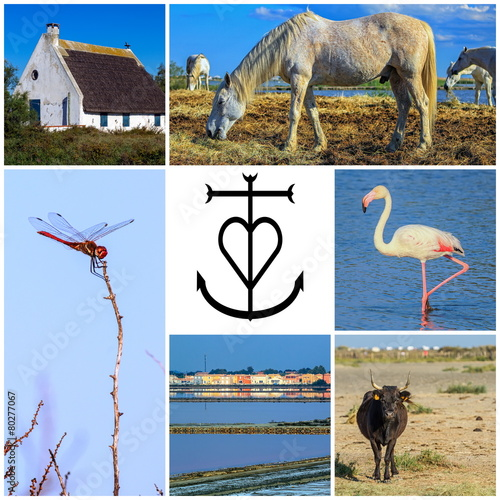 Tuinposter Flamingo Collage of Camargue photos, France