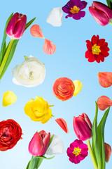fallende Blüten und Blumen vor blauem Himmel