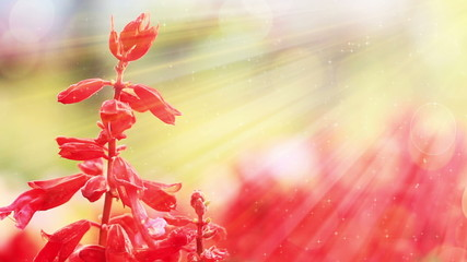 red flowers and sunlight slowmotion seamless loop