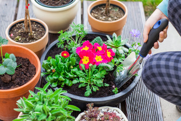 Planting herbs and flowers