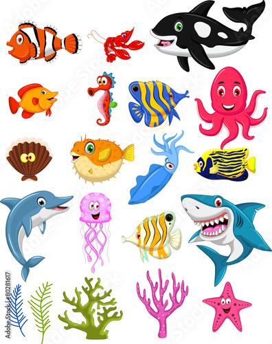 sea life cartoon collection - 80281617