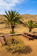 Oasis with palm trees in desert landscape, Madeira island