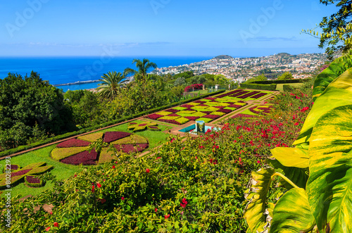 Monte tropical gardens in Funchal town, Madeira island, Portugal - 80282293