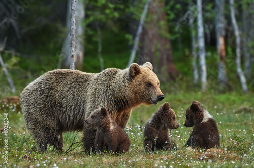Aluminium Dragen Mother bear and cubs