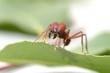 Large ants on green leaf. - 80283493