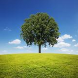 Fototapety Uralter Baum