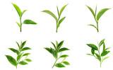 Green tea leaf isolated on white background © artphotoclub
