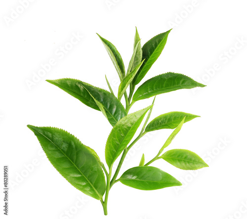 Poster Koffie Green tea leaf isolated on white background