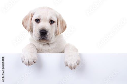 Foto Spatwand Hond Puppy dog holding sign or banner isolated