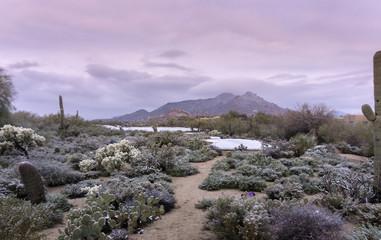 Winter desert landscape, Scottsdale,Az,USA