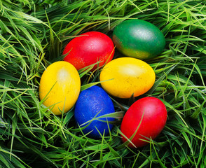 Colorful Easter eggs on green grass. Top view
