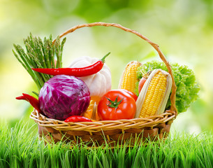 Fresh vegetables in the basket on green grass and on nature back