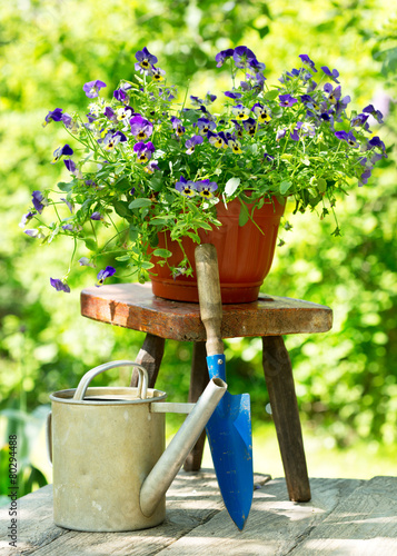 Staande foto Pansies summer flowers with tools in a garden