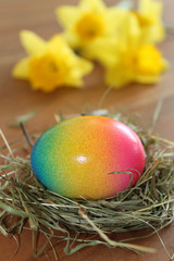 Frohe Ostern - Osternest mit bunt gefärbtem Ei