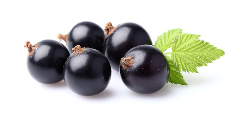 Blackcurrant with leaf