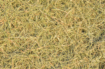 Die grass