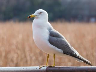 beautiful smart seagull