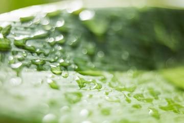 A close up of a leaf