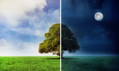 Night and day scene with tree