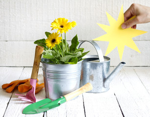 Gardening tools and flowers abstract floral concept with sun
