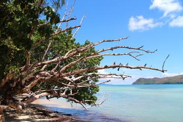 Bäume hängen über Meer