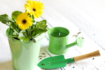Flowers and garden tools abstract gardening concept