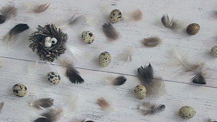 Eggs and feathers close to the nest.