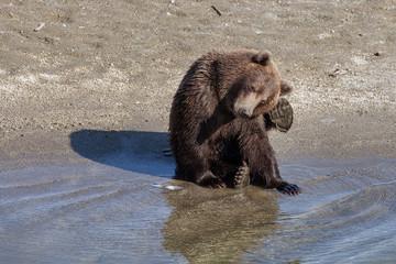 Маленький медведь