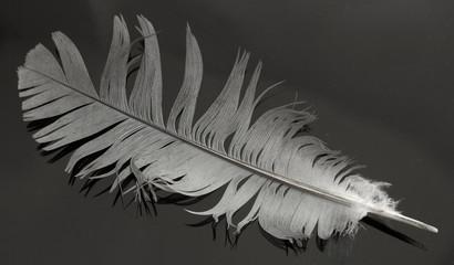 one bird feather